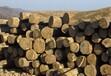 供应俄罗斯桦木原木