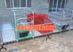 長期供應國標管焊接雙體母豬產床豬場必選價格優惠母豬分娩床安置條件