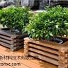 永兴生态木生产嘉禾生态木生产临武生态木生产德重供