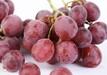 南非水果柑橘进口报关关税及综合税率