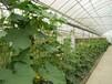 大棚骨架蔬菜大棚温室大棚