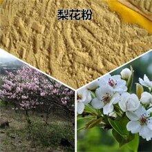 山东梨花粉产地图片