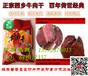 陜西漢中特產正宗西鄉牛肉干,麻辣五香醬香牛肉干廠家批發