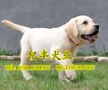 北京哪卖纯种柴犬日系柴犬多少钱亿丰犬舍直销柴犬