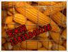 镀锌电焊网镀锌铁丝网圈玉米圈玉米用铁丝网厂家直销圈玉米网