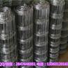 厂家供应全自动草原网机器牛栏网机器围栏网焊网机价格优惠