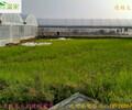 梅州花卉大棚简易薄膜大棚简易花卉大棚搭建