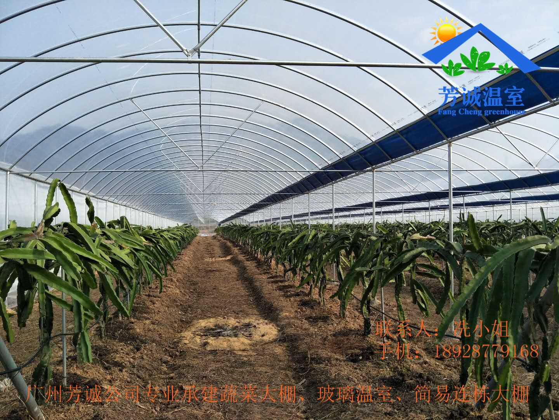种菜大棚一亩地投资多少,市场前景如何 - 致富热