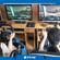 模擬駕駛訓練館