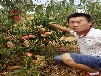 華玉桃苗新品種最適合上海種的桃樹苗品種