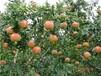 花石榴苗营养价值及功效