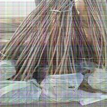 7公分樱桃树苗7公分樱桃树苗口感好的樱桃树苗品种图片