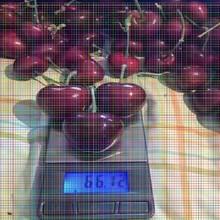 黑珍珠樱桃树苗黑珍珠樱桃树苗樱桃树苗怎么打药图片