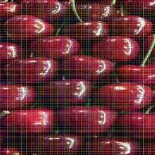 目前新品种樱桃苗目前新品种樱桃苗矮化樱桃树苗图片