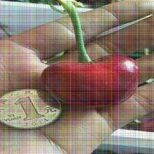 兰丁樱桃树苗兰丁樱桃树苗纯正品种营养价值及功效图片