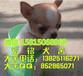 廣州口碑比較好的狗場,廣州哪里有賣吉娃娃犬