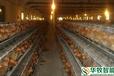 武汉华牧HM10+环境监控系统自动化蛋鸡养殖设备