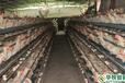 武汉华牧HM10+环境监控系统蛋鸡自动化养殖设备