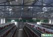 武汉华牧HM10+环境监控系统全自动化养殖设备