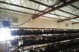 华牧hM10+环境监控系统自动化蛋鸡养殖设备