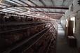 武汉华牧HM10+环境监控系统蛋鸡养殖自动化设备