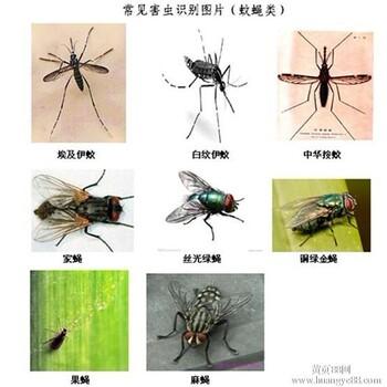 各类场所灭鼠杀虫,灭白蚁,白蚁防治等