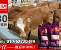 北京犊牛预混料厂家小牛预混料
