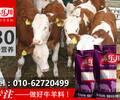北京牛犊饲料厂家犊牛饲料