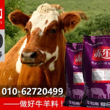 育肥牛增肥预混料育肥牛饲料