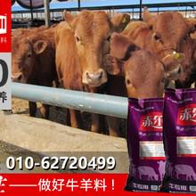 淘汰母牛增肥上膘饲料肉牛饲料