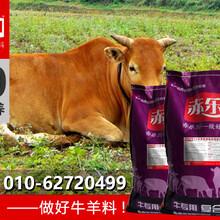 肉牛增肥饲料肉牛饲料
