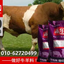 驼峰牛增肥预混料肉牛专用饲料