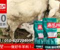 母羊补充营养专用饲料母羊营养饲料