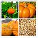 南瓜籽提取物南瓜子提取物厂家批发价格优惠抗炎杀菌