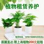 上海绿东植物租赁绿植花卉租摆室内办公绿化上海植物养护管理图片