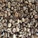 福标商业咖啡豆越南罗姆咖啡豆水洗豆大量批发各原产国商业生豆