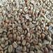 批发阿拉比卡咖啡豆墨西哥咖啡豆Guerrero庄园蜜处理咖啡生豆17目