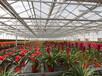 昆明铁皮石斛种植温室大棚花卉温室