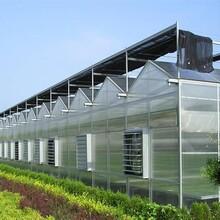 温室温室内外遮阳系统、内保温系统、钢缆驱动遮阳系统