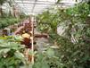 农业观光温室,景观温室,生态温室建造