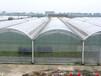 西安温室大棚水产养殖温室建设