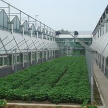 玻璃温室大棚内外遮阳系统降温系统配件遮阳网生产厂家