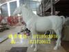 砂岩雕塑马人造砂岩动物圆雕园林景观摆设仿真白马