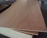 包装箱用漂白杨木贴面胶合板