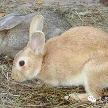 宏源野兔养殖—致富新路