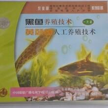 黃顙魚養殖技術大全視頻教程黃骨魚苗怎么繁殖黃辣丁黃刺魚養殖技術視頻圖片