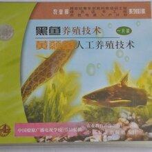 黄颡鱼养殖技术大全视频教程黄骨鱼苗怎么繁殖黄辣丁黄刺鱼养殖技术视频图片