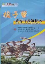 梭子蟹養殖技術大全視頻教程資料海螃蟹怎么土池育苗青蟹養殖技術視頻圖片