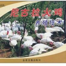火鸡养殖技术视频教程小火鸡饲养方法尼古拉火鸡养殖技术大全资料图片