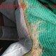厂家草籽生态毯